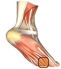 Soin des douleurs des pieds p dicurie et podologie for Douleur interieur du pied